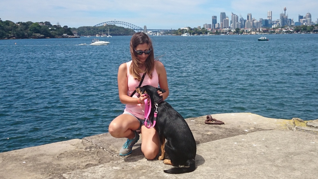 sydney harbour, kelpie, bea labady
