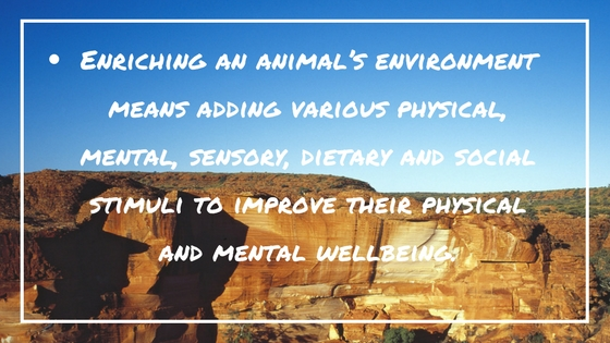 environmental enrichment animals