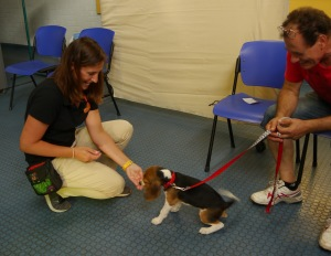 puppy preschool_beagle2